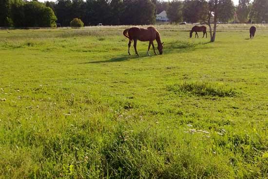 En bild från när gräset var grönt.
