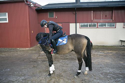 älskade häst